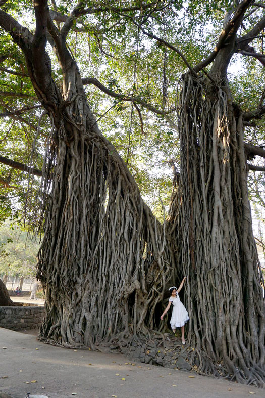 Girl in white dress beside banyan tree